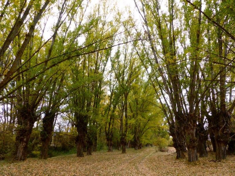 Andada Poborina en Parque Chopo Cabecero